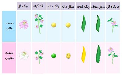 صفات گیاه نخود فرنگی