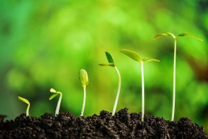 هورمون های گیاهی — به زبان ساده