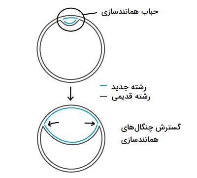 همانندسازی کروموزوم باکتری