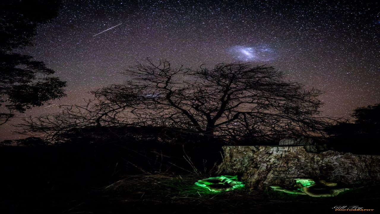 از قارچ شبح تا ابر ماژلانی — تصویر نجومی روز