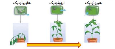 اسمز در سلولهای گیاهی