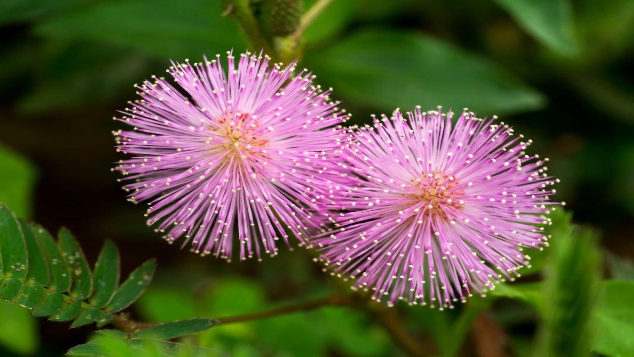گل قهر و آشتی — ویدیوی علمی