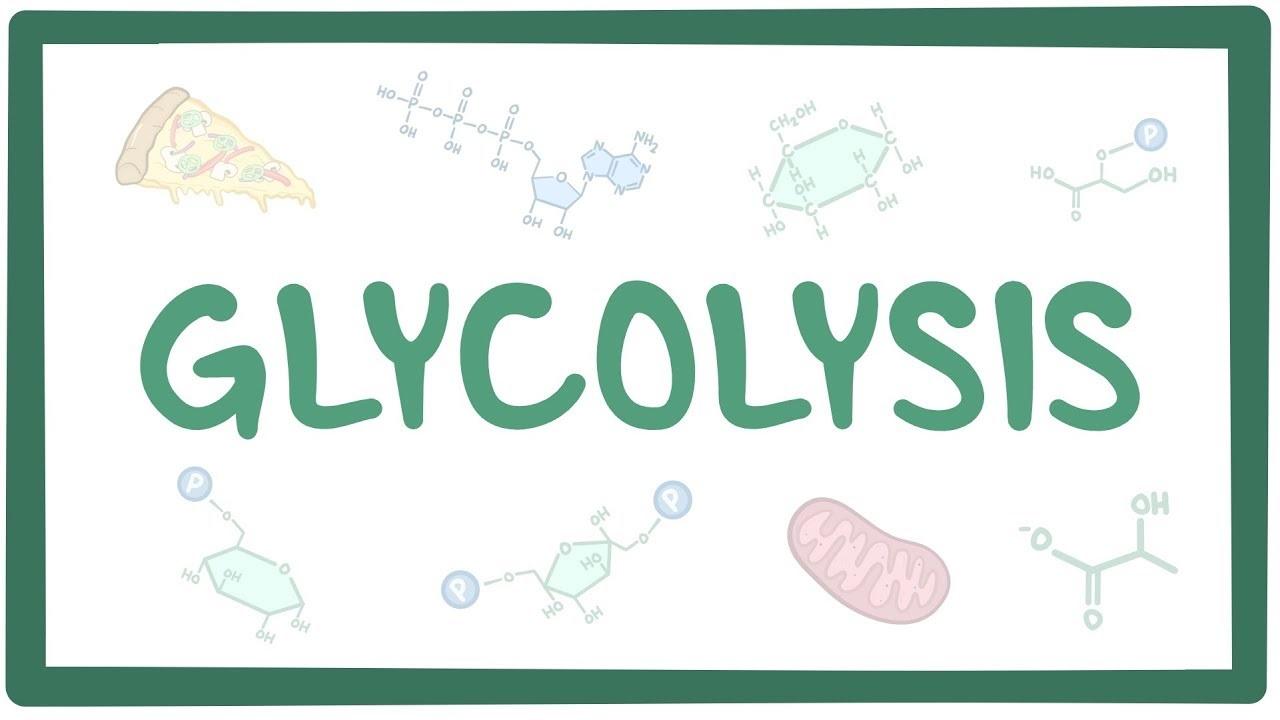 گلیکولیز چیست؟ — به زبان ساده