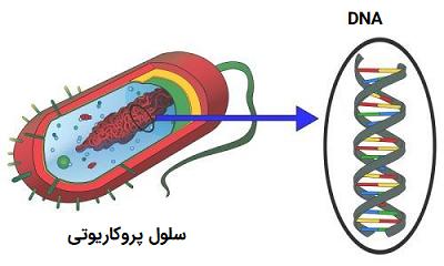سلول پروکاریوت