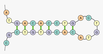 ساختار stem loop