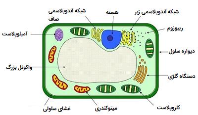 سلول گیاهی