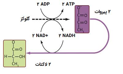 تخمیر اسید لاکتیک