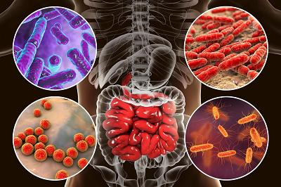 میکروبهای موجود در سیستم گوارش انسان