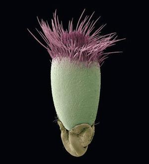 گیاه میکروسکوپی