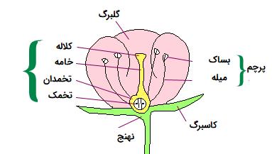 ساختمان تولید مثلی در گیاهان