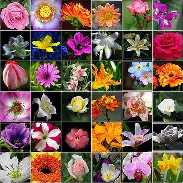 انواع گیاهان گلدار