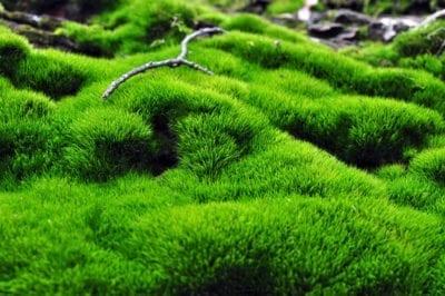 گیاهان غیر آوندی