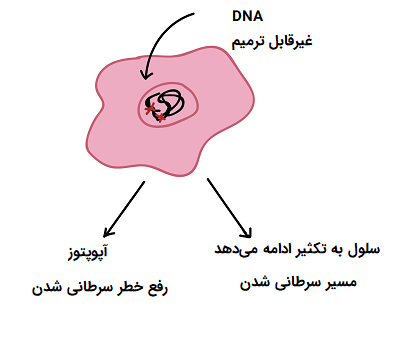 آپوپتوز سلول پیش سرطانی
