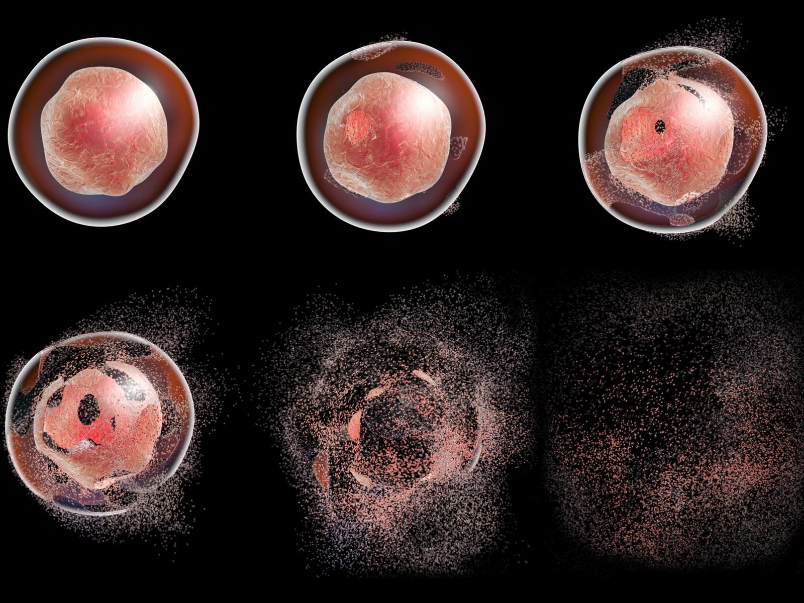 آپوپتوز یا مرگ برنامه ریزی شده سلول — به زبان ساده