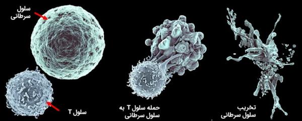 آنتی ژن سرطانی