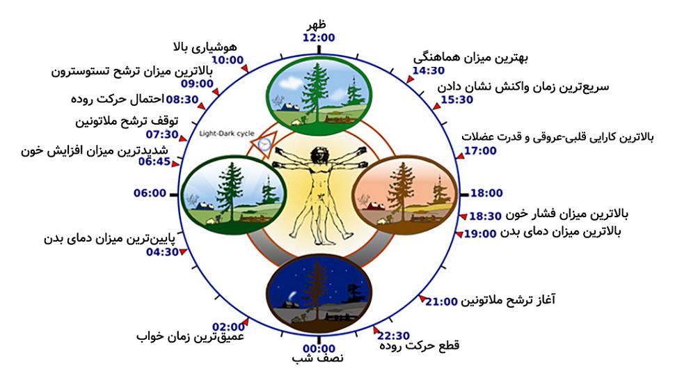 چرخه خواب