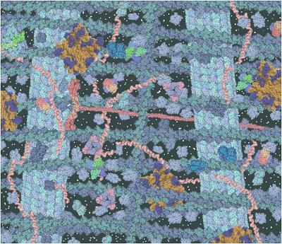 سیتوزول و اسکلت سلولی