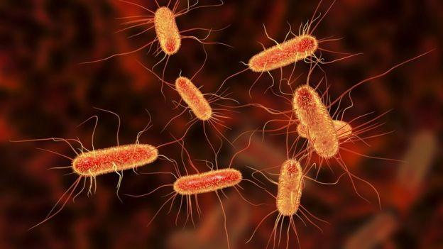 ای کولی (E. coli) چیست؟ — از صفر تا صد