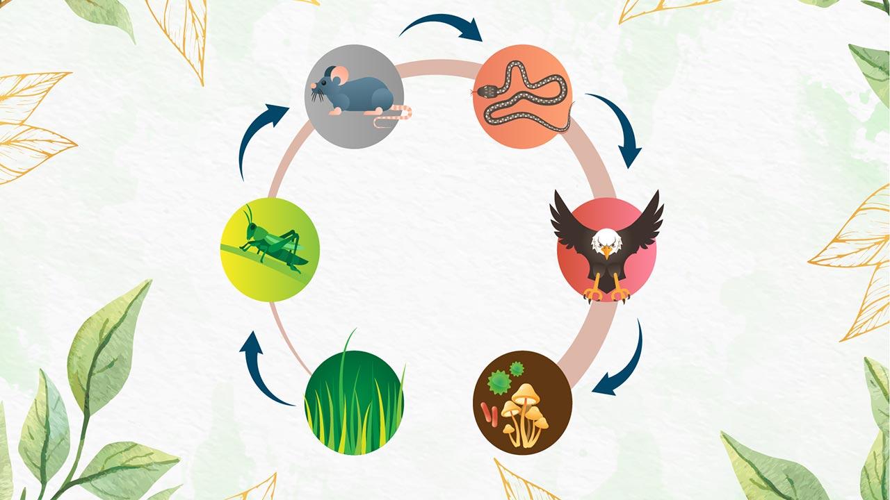 زنجیره غذایی چیست؟ | به زبان ساده