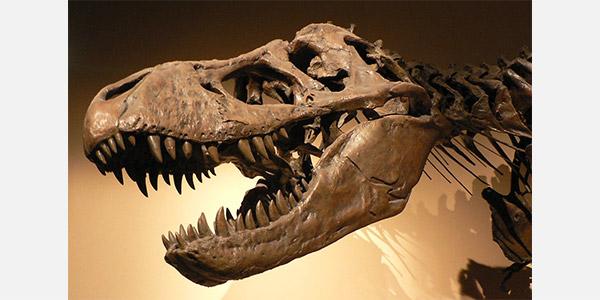 تکامل و فسیل