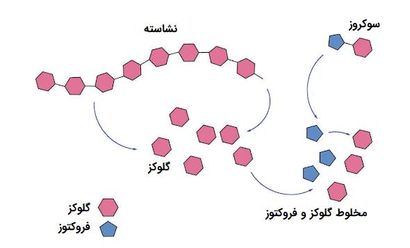 کاتابولیسم پلی ساکاریدها