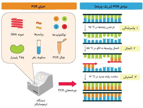 مراحل pcr