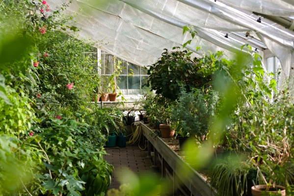 مهندسی تولید و ژنتیک گیاه