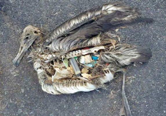 فواید بازیافت