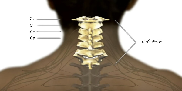 مهره های گردنی