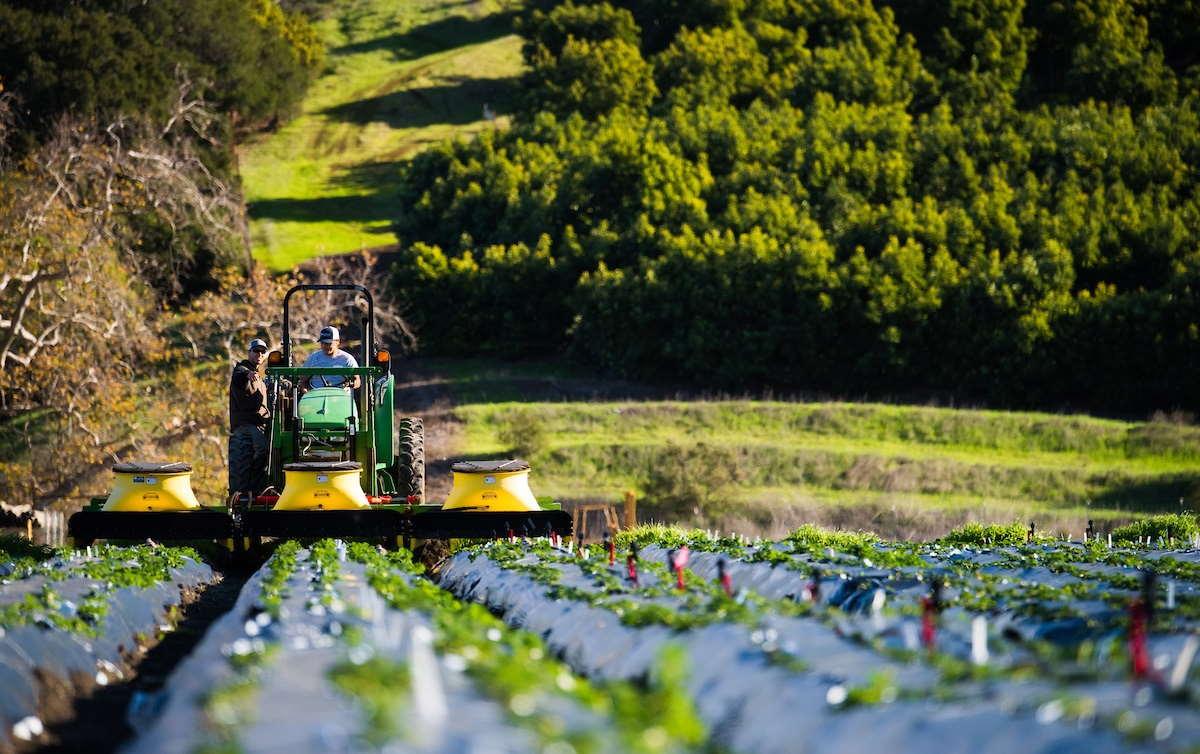 رشته علوم و مهندسی باغبانی | معرفی گرایش ها، حقوق و درآمد و بازار کار