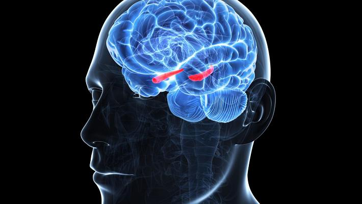 اختلال در مدارهای عصبی