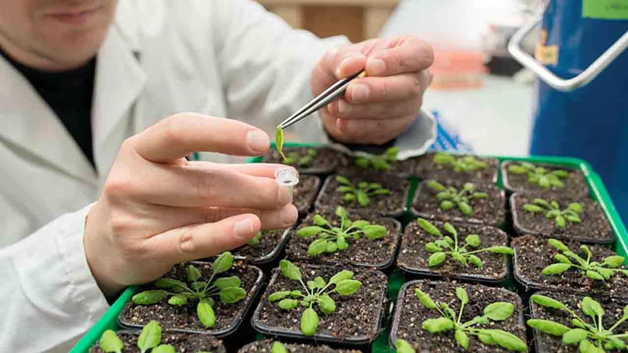 رشته مهندسی کشاورزی | معرفی، حقوق و درآمد و بازار کار