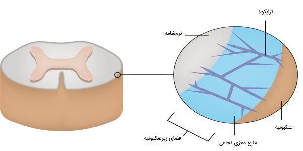 مایع مغزی نخاعی