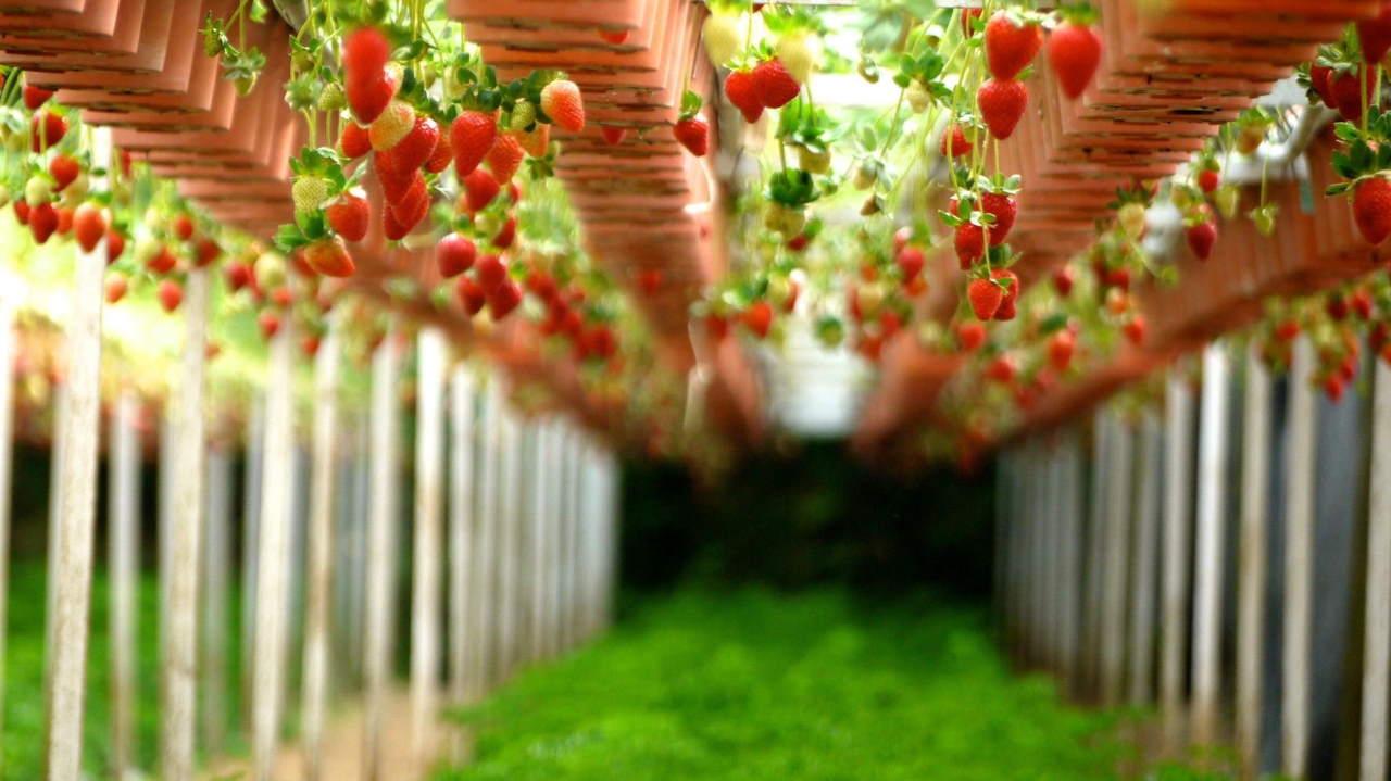 رشته علوم و مهندسی صنایع غذایی | معرفی گرایش ها، حقوق و درآمد و بازار کار