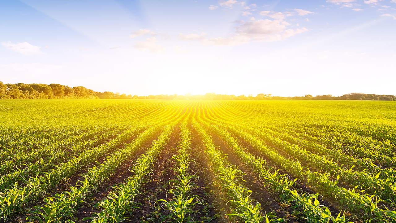 رشته مهندسی تولید و ژنتیک گیاه | معرفی گرایش ها، حقوق و درآمد و بازار کار