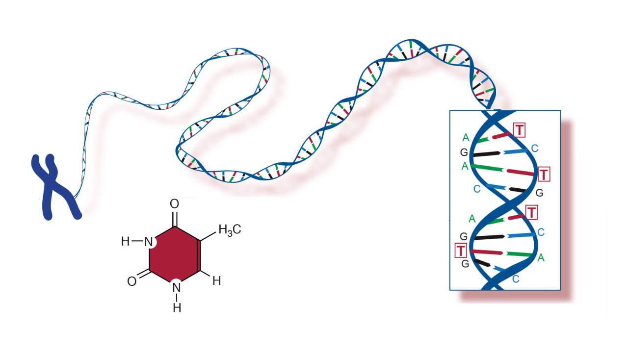 نوکلئوتید چیست؟ — به زبان ساده