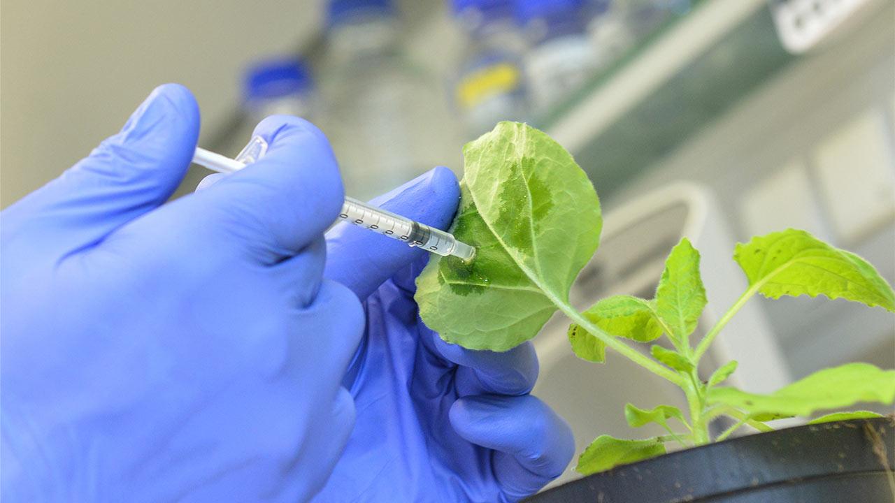 رشته گیاه پزشکی | معرفی گرایش ها، دروس، درآمد و بازار کار