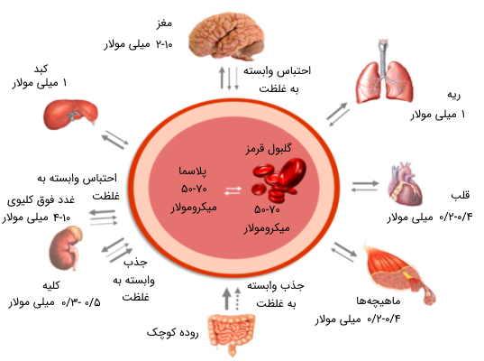 ویتامینهای محلول در آب