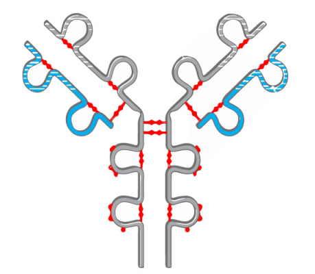 ساختار چهارم