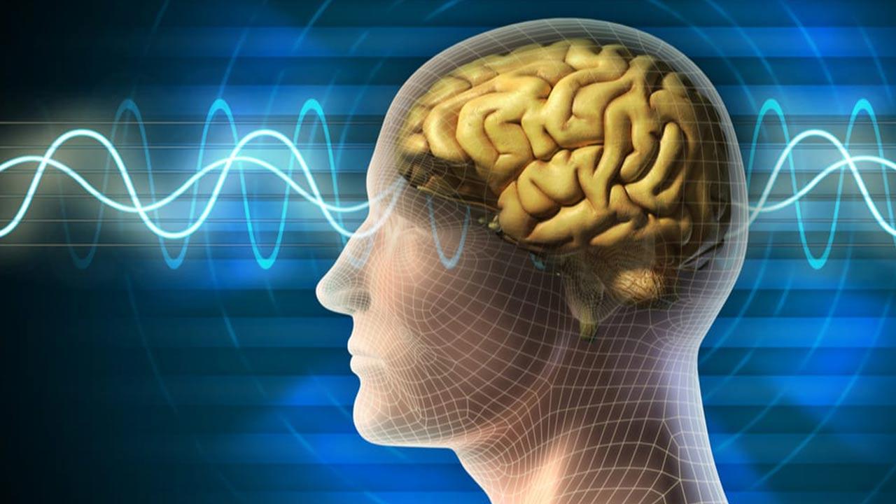 مغز انسان — آناتومی، عملکرد، بیماری ها و سایر دانستنی ها