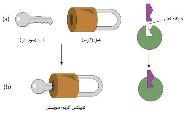 تئوری قفل و کلید