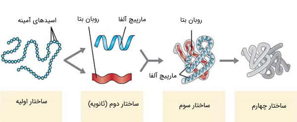 سطحهای مختلف ساختار پروتئین