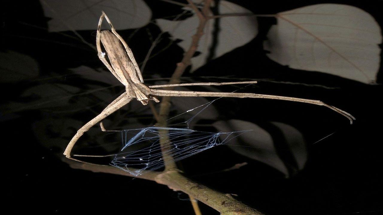 عنکبوت تارافکن — ویدیوی علمی