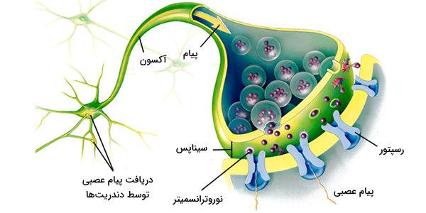 نورون عصبی