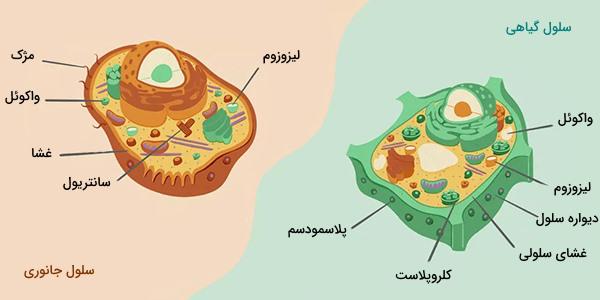 سلول گیاهی و جانوری