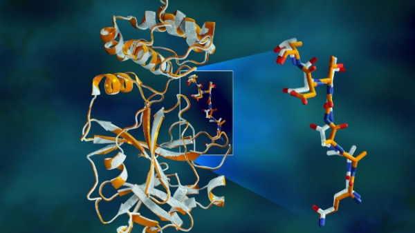 ساختار دوم پروتئین