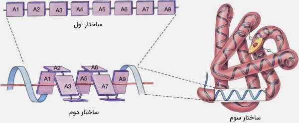 ساختار سوم پروتئین