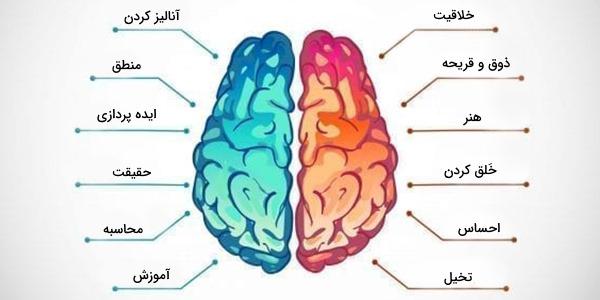 نیمکره های مغز