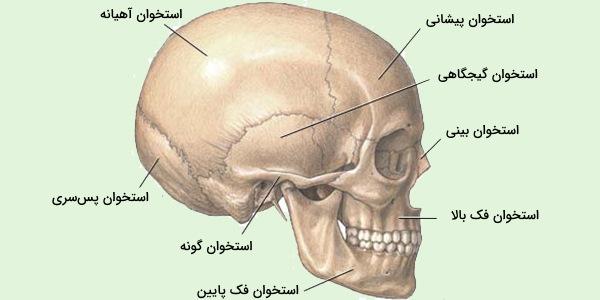 استخوان جمجمه