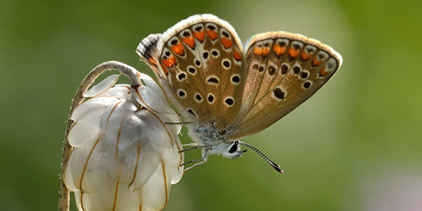 پروانه دستفروش آبی